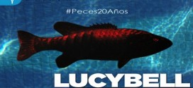 """Lucybell vuelve al Casino de Viña del Mar  y celebrará 20 años de su disco """"Peces"""" @lucybelloficial @Enjoy_Vina"""